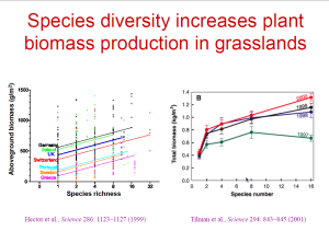 species_diversity_increases_biomass