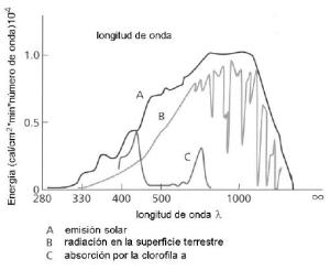 absortion_clorofila_especto_solar_atmosfera_atmosphere_tierra